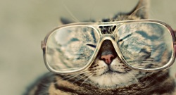 Cat Glasses Slideshow Live wallpaper screenshot 4/6