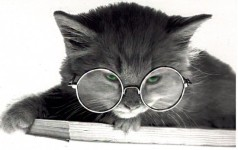 Cat Glasses Slideshow Live wallpaper screenshot 5/6