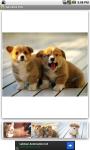 Adorable Pets screenshot 2/3