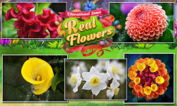 Educational Game Real Flowers screenshot 4/6