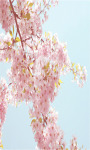 Sakura Flower Live Wallpaper Free screenshot 4/5