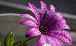 Best Beautiful Flower HD Wallpaper screenshot 1/6
