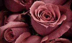 Best Beautiful Flower HD Wallpaper screenshot 2/6