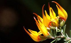 Best Beautiful Flower HD Wallpaper screenshot 3/6