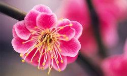 Best Beautiful Flower HD Wallpaper screenshot 5/6