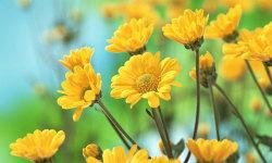 Best Beautiful Flower HD Wallpaper screenshot 6/6