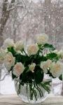 Roses Pot Live Wallpaper screenshot 1/3