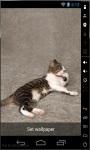 Cat Dreams Live Wallpaper screenshot 2/2