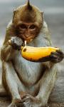What do animals eat screenshot 4/4