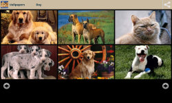 Dogs With Cats Wallpapers screenshot 2/6
