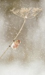 Winter Little Bird LWP screenshot 1/3