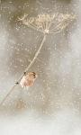Winter Little Bird LWP screenshot 2/3