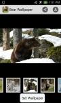 bear wallpaper hd screenshot 1/4