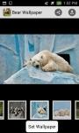 bear wallpaper hd screenshot 3/4