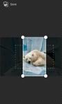 bear wallpaper hd screenshot 4/4