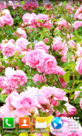 Pink Roses Live Wallpapers screenshot 5/6