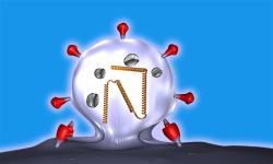 Measles Virus Replication 3D screenshot 1/3