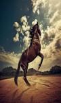Horse Run screenshot 4/5