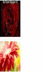 Fresh sparkle dew drops on red flower Wallpaper HD screenshot 2/3