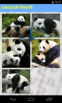 Panda Jigsaw Puzzle screenshot 3/6