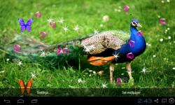 3D Peacocks Live Wallpaper screenshot 3/4