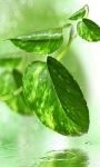 Green Leaf Live Wallpaper screenshot 1/3