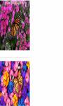 Butterfly on the onion flowers Wallpaper HD screenshot 2/3
