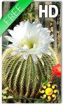 Cactus Flowers LWP screenshot 1/2