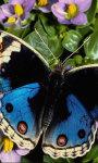 Butterfly Wallpapers app screenshot 1/3