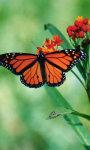 Butterfly Wallpapers app screenshot 2/3