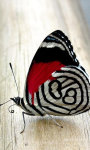 Butterfly Wallpapers app screenshot 3/3