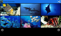 Underwater World Beauty Wallpapers screenshot 2/6