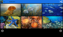 Underwater World Beauty Wallpapers screenshot 3/6