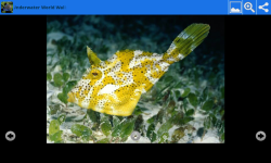 Underwater World Beauty Wallpapers screenshot 6/6