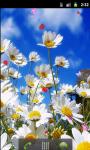Daisy Flower Field Live Wallpaper screenshot 1/5