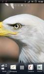 Awesome Bald Eagle Live Wallpaper screenshot 2/3