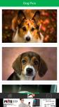 Dog Pics screenshot 2/6