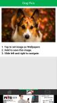 Dog Pics screenshot 3/6