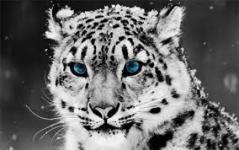 Exotic Animals Wallpapers in High Quality Pictures screenshot 1/6