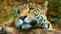 Exotic Animals Wallpapers in High Quality Pictures screenshot 2/6