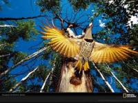 Exotic Animals Wallpapers in High Quality Pictures screenshot 5/6