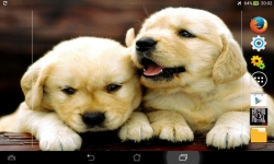Cute Dogs HD Live screenshot 1/6