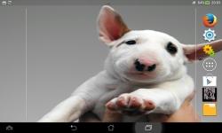 Cute Dogs HD Live screenshot 2/6