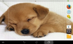 Cute Dogs HD Live screenshot 5/6
