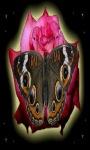 Pink Rose Butterfly LWP screenshot 1/3