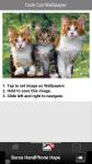 Free Cute Cat Wallpapers screenshot 3/6