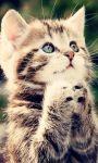Cute Kittens Images HD Wallpaper screenshot 1/6