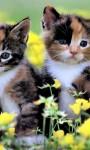 Cute Kittens Images HD Wallpaper screenshot 2/6
