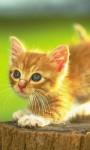 Cute Kittens Images HD Wallpaper screenshot 5/6