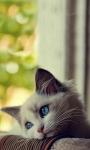 Cute Kittens Images HD Wallpaper screenshot 6/6